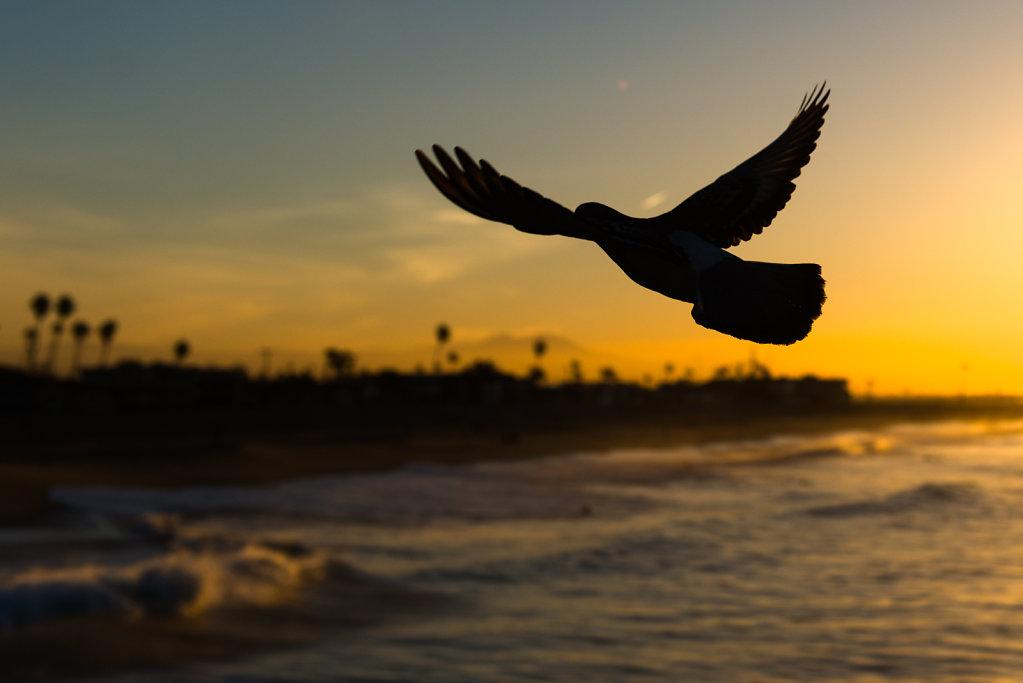 LA-Bird-1.jpg